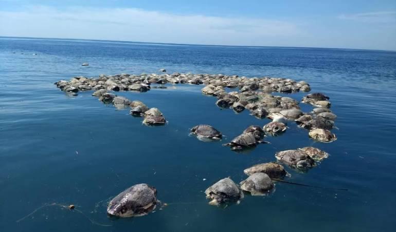 Cerca de 300 tortugas en peligro de extinción murieron en México