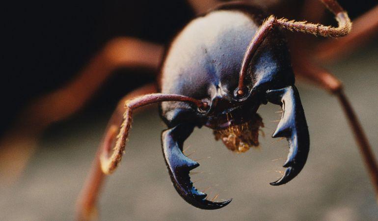 Calentamiento global e impacto sobre animales y cultivos: Científicos advierten que cambio climático aumentará actividad de insectos