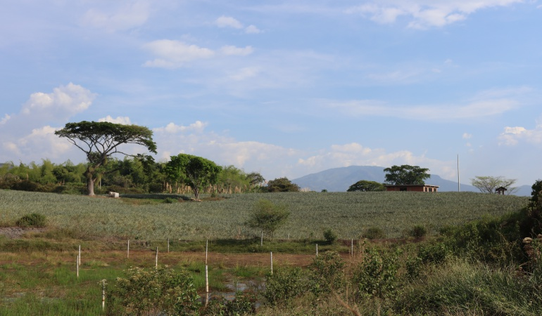 Errores en puesta en marcha de restitución de tierras: Restitución de tierras no ha cumplido con sus metas: CCJ