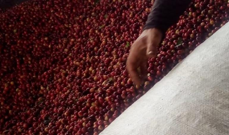 Precio del cafè: De Starbucks a Nespresso, los consumidores pagan cada vez más caro su café
