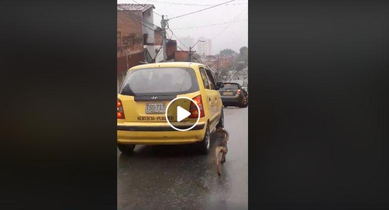 ¡Indignante! Mujer abandonó a su perro y la persiguió por 20 cuadras