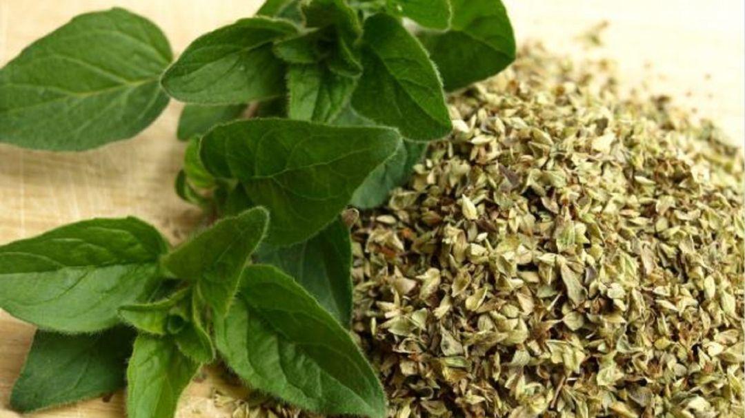 Hierbas aromáticas: Plantas aromáticas autóctonas, emprendimiento en Boyacá
