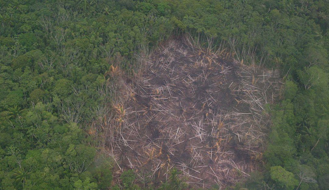Imagen de referencia deforestación ambiental