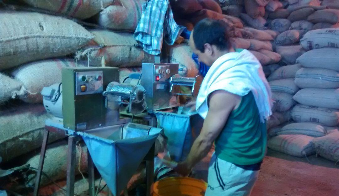 Producción cafetera en Caldas