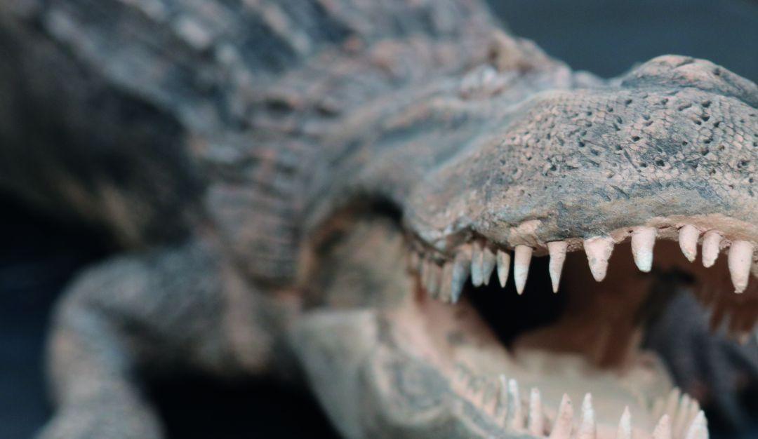 Gigantes extintos Instituto Humboldt: Un viaje a la prehistoria con la exposición Gigantes Extintos