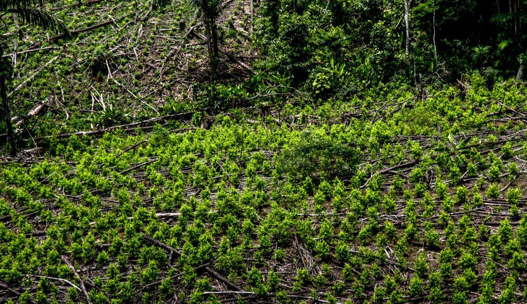 Masacre en Mapiripán: Víctimas de Mapiripán habían negociado para explotar cultivo de coca
