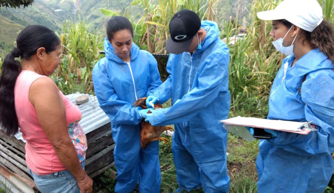 Enfermedades de aves: Ibagué es ejemplo para prevenir enfermedad del Newcastle en aves