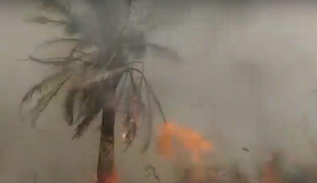 incendio forestal acaba con cultivos de palma: Incendio acaba con cultivos de palma en Puerto Wilches, Santander