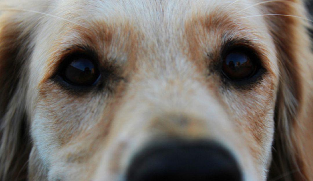 Perro espera a su amo en las puertas del hospital hasta el final