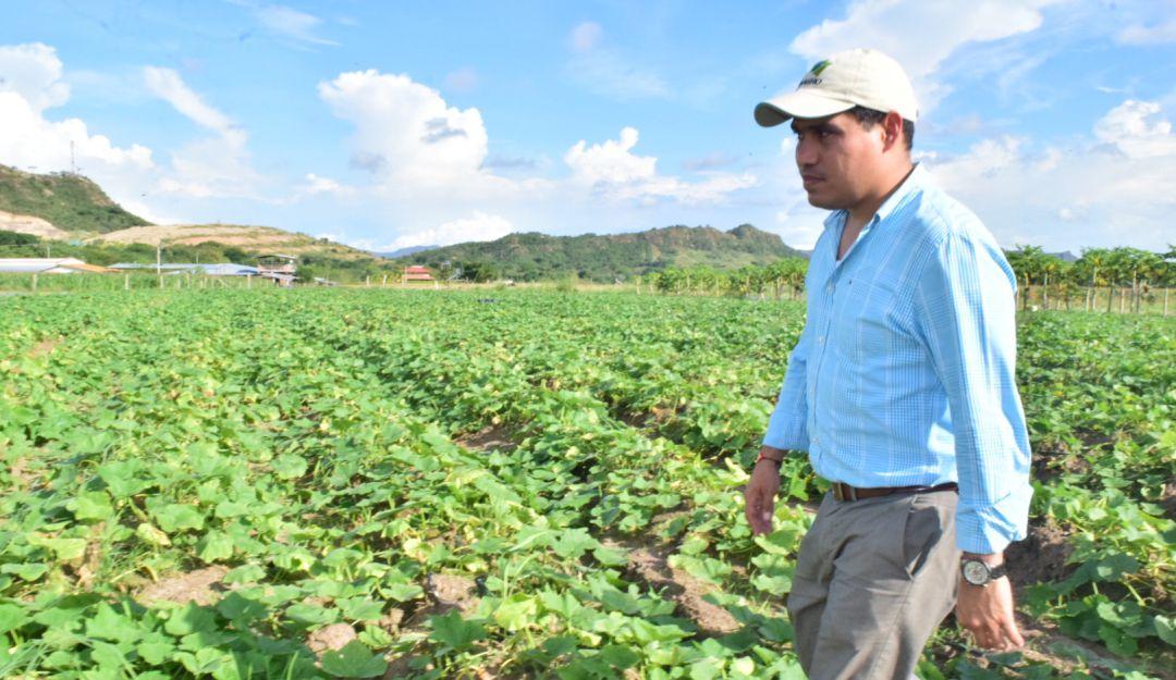 Cultivos en Tolima Parcelas Demostrativas: No solo de arroz vive Ibagué