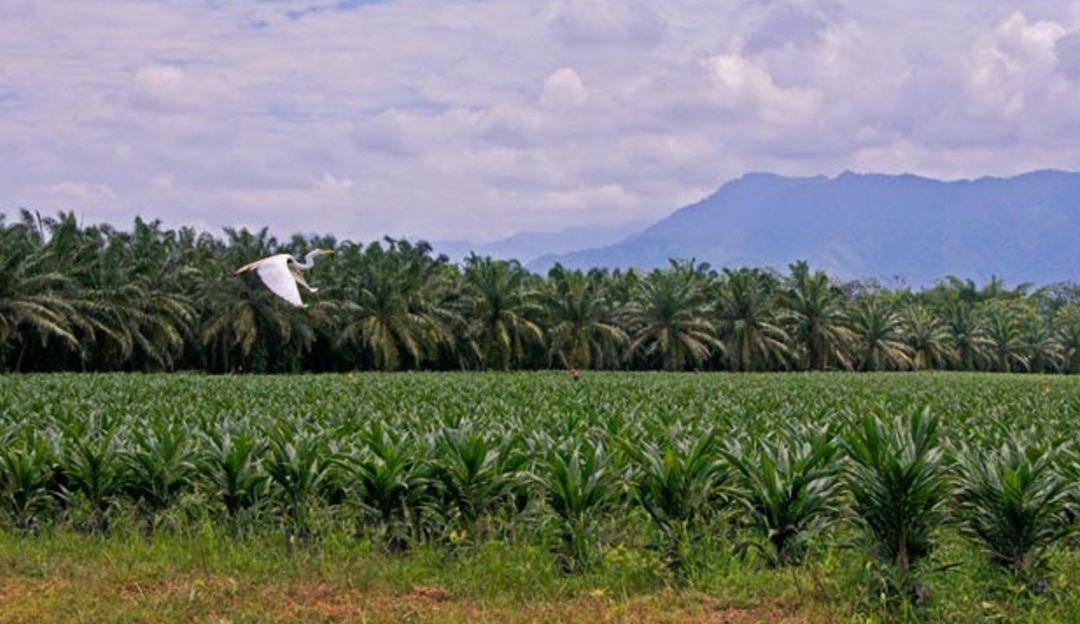 Pesca: La palmicultura se extiende en Norte de Santander