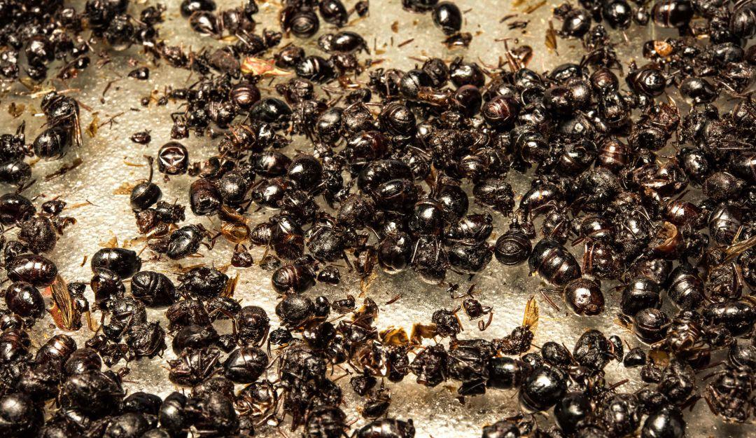 Unas hormigas salvan a una adolescente de 16 años de ser violada