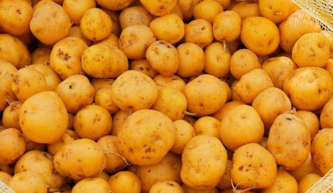 Papas criollas: Las papas criollas, muy alimenticias y no engordan