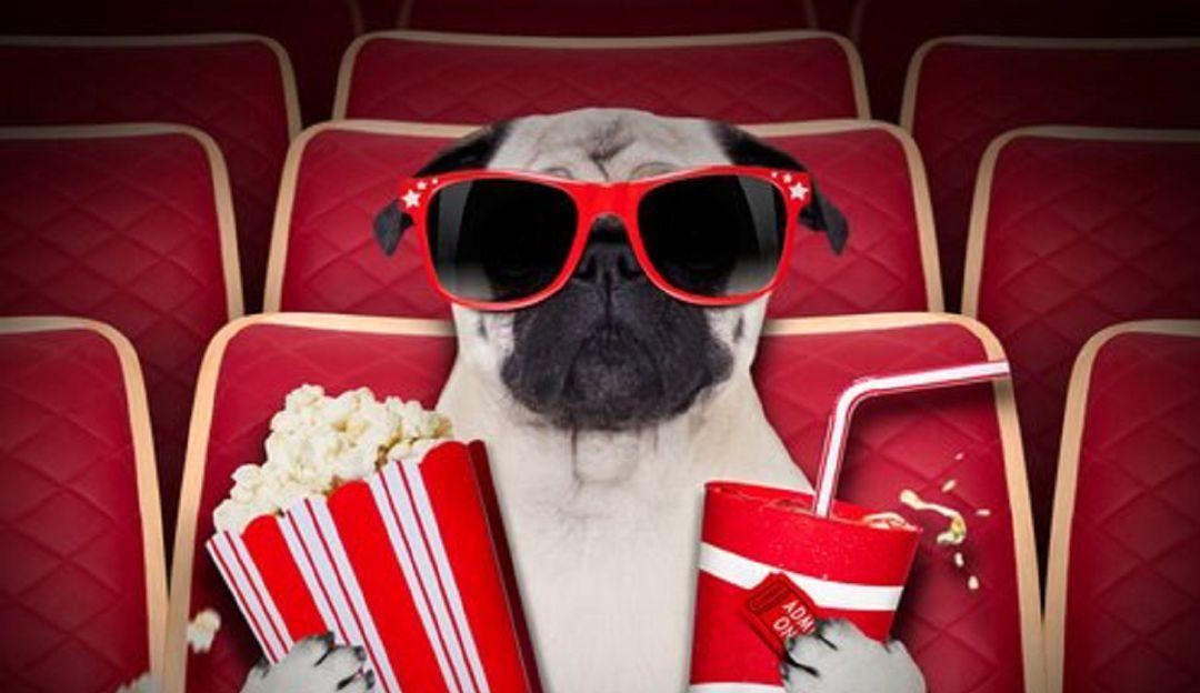 Cine para mascotas: Abren cine donde es permitido asistir con perros