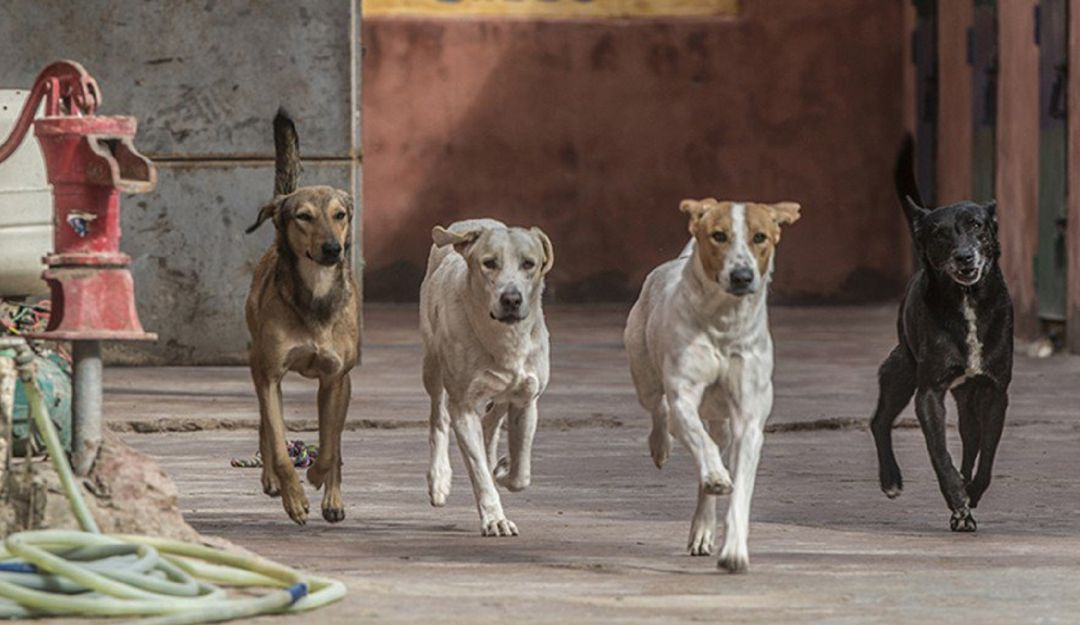 Más atención a habitantes de calle que tengan mascotas: Mascotas de habitantes de calle cuentan con hogar de paso