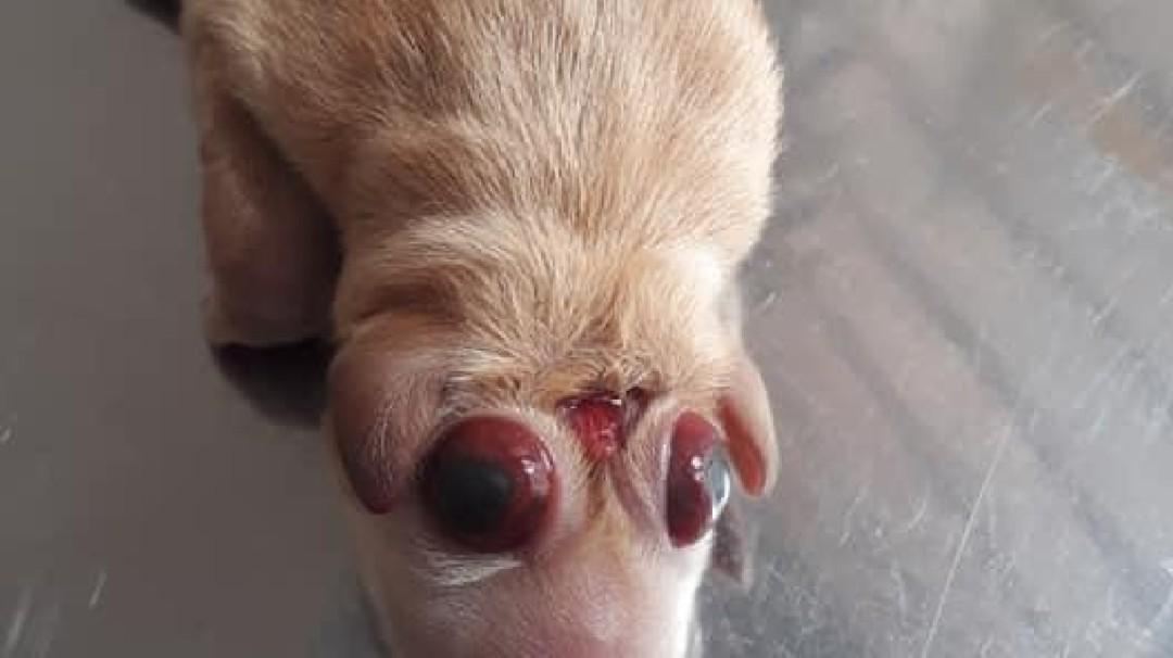 Animales nacen deformes por contaminación ambiental en Barrancabermeja