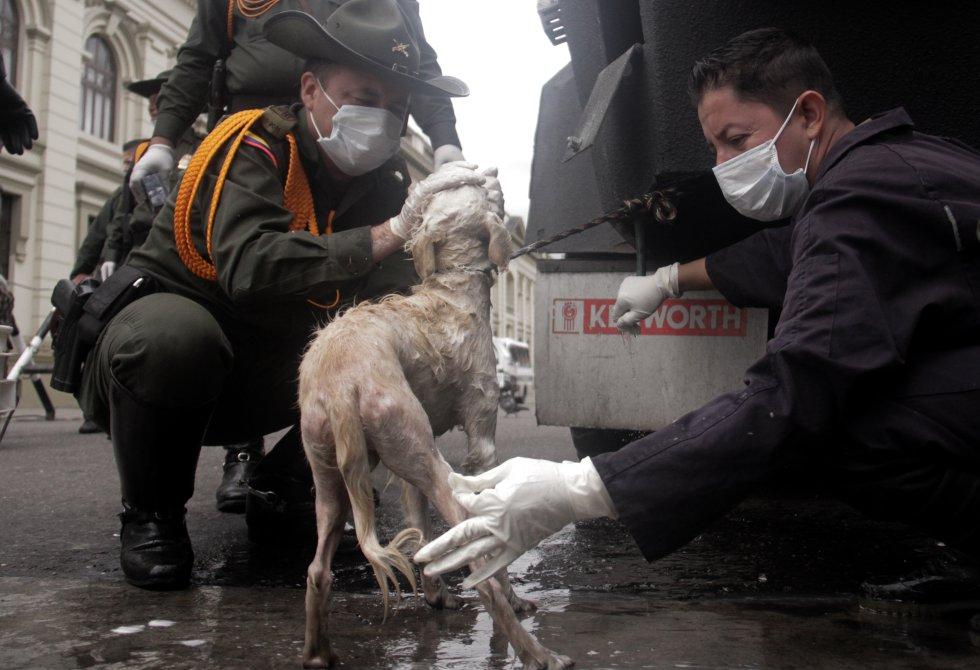 Se realizaron jornadas de vacunación y baño para cada mascota, que luego podrán ser adoptadas.