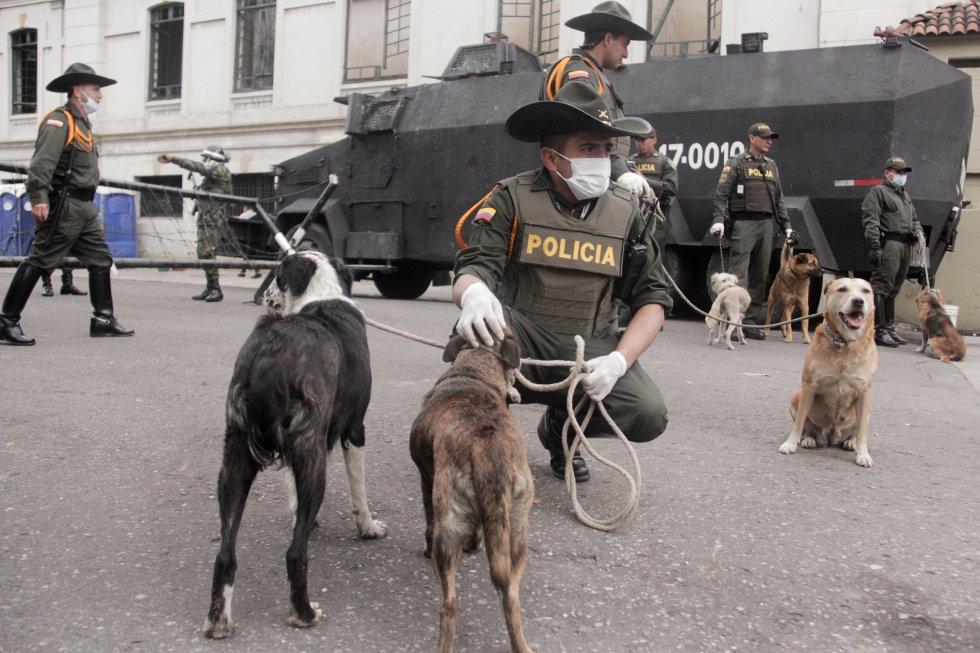 Policía Nacional rescato varios animales que se encontraban en la zona del Bronx.