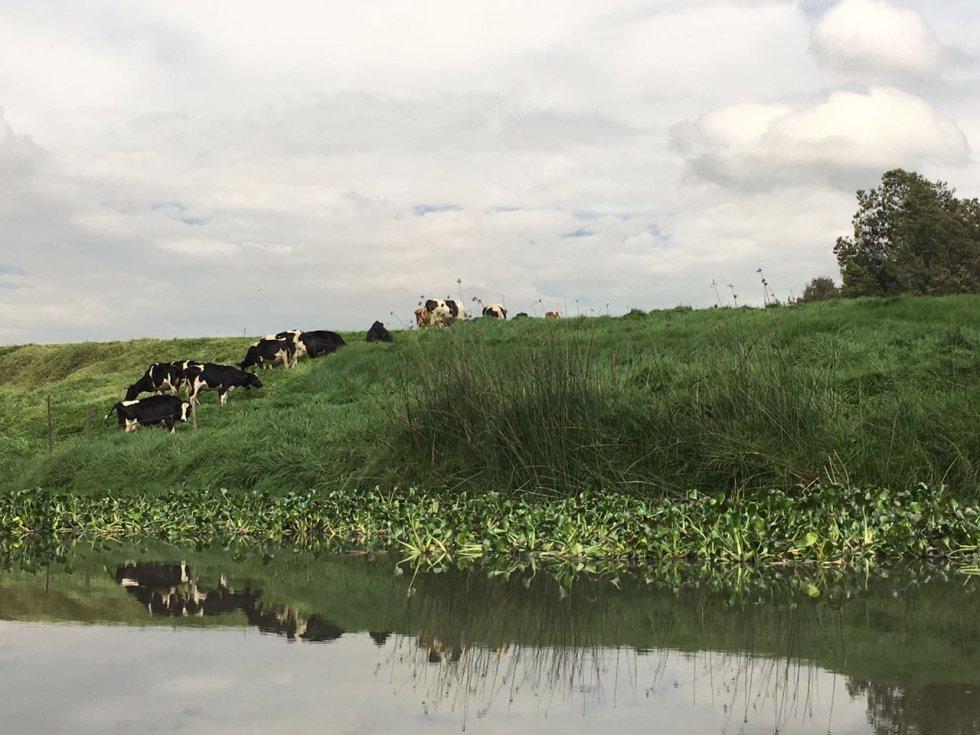 Recordemos que Consejo de Estado, emitió un fallo el 28 de marzo del 2014, en el que daba un plazo perentorio de máximo tres años, que se cumple en el 2017 para poner a rodar un plan de salvamento del río Bogotá y sentar las bases de su descontaminación definitiva.