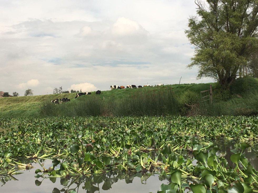 Esta medida estaría dirigida a los propietarios de ganados por afectar los trabajos de recuperación del afluente.