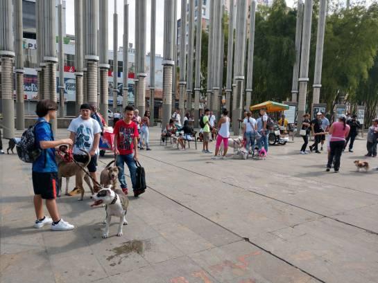 Perros pitbull marchan en Medellín contra estigmatización