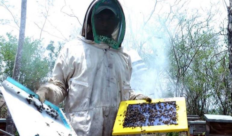 Caldas lucha por mantener la apicultura