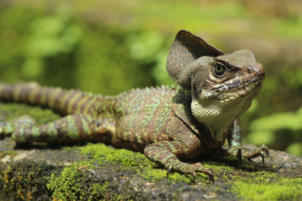 En fotos: Gorgona paraíso de fauna y flora