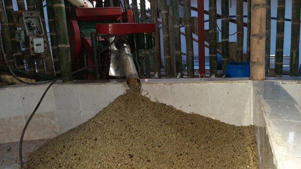 Café en la trilla...uno de los proceso que a diario se ve en nuestras fincas del Quindío