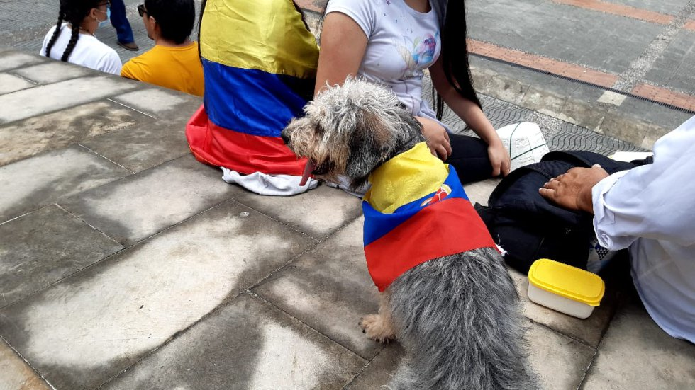 Las mascotas también en la manifestación