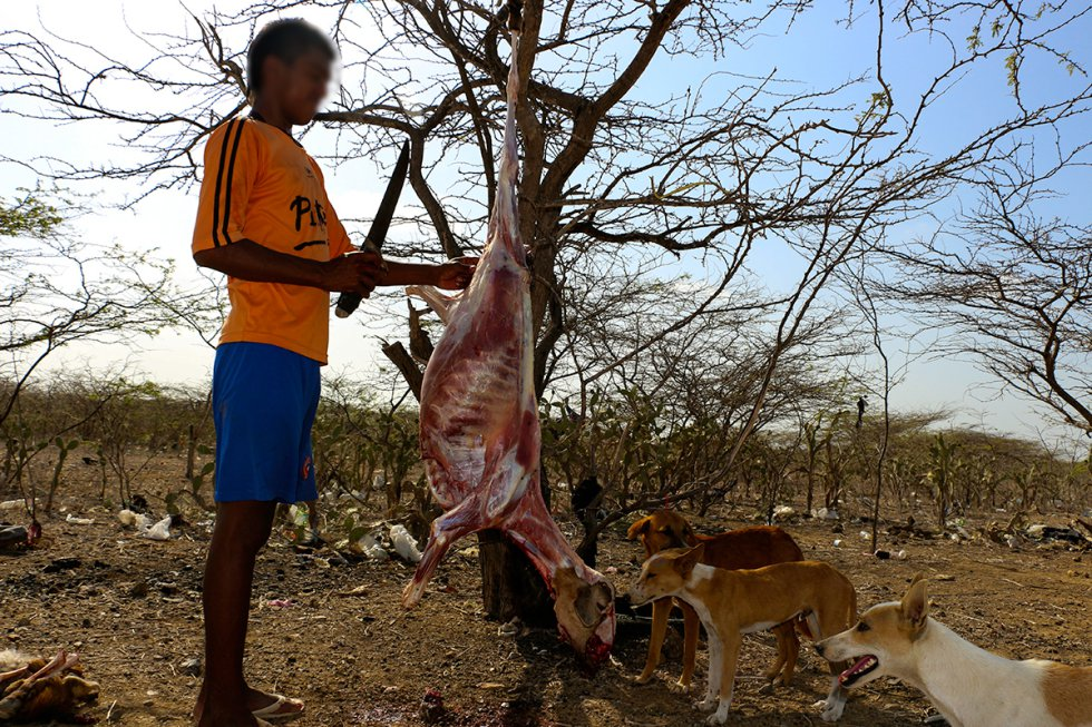 Sacrifican los animales por la intensidad de la sequía.