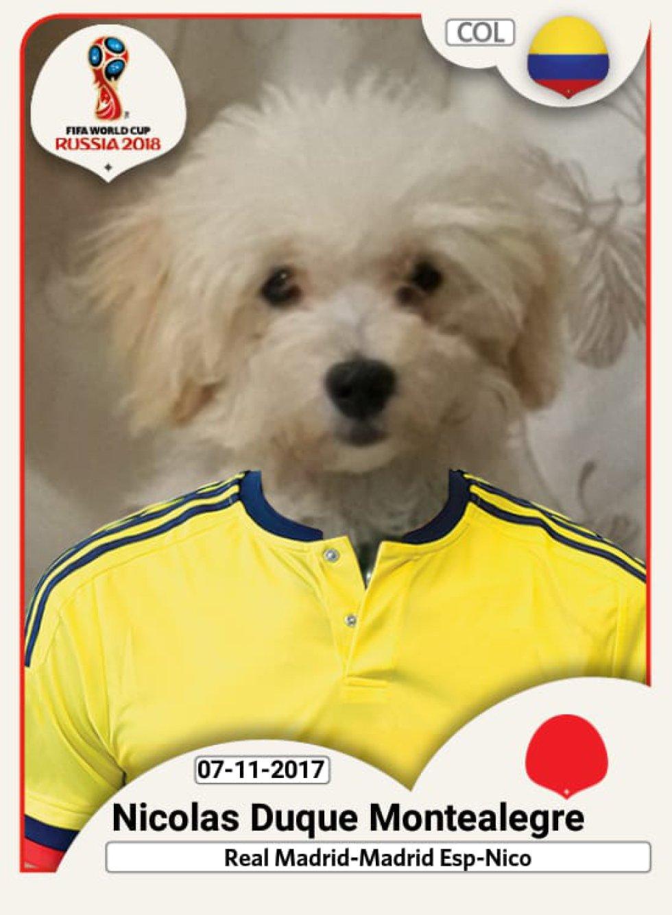 Alejandro Duque nos envía la fotografía de su perro Nicolás