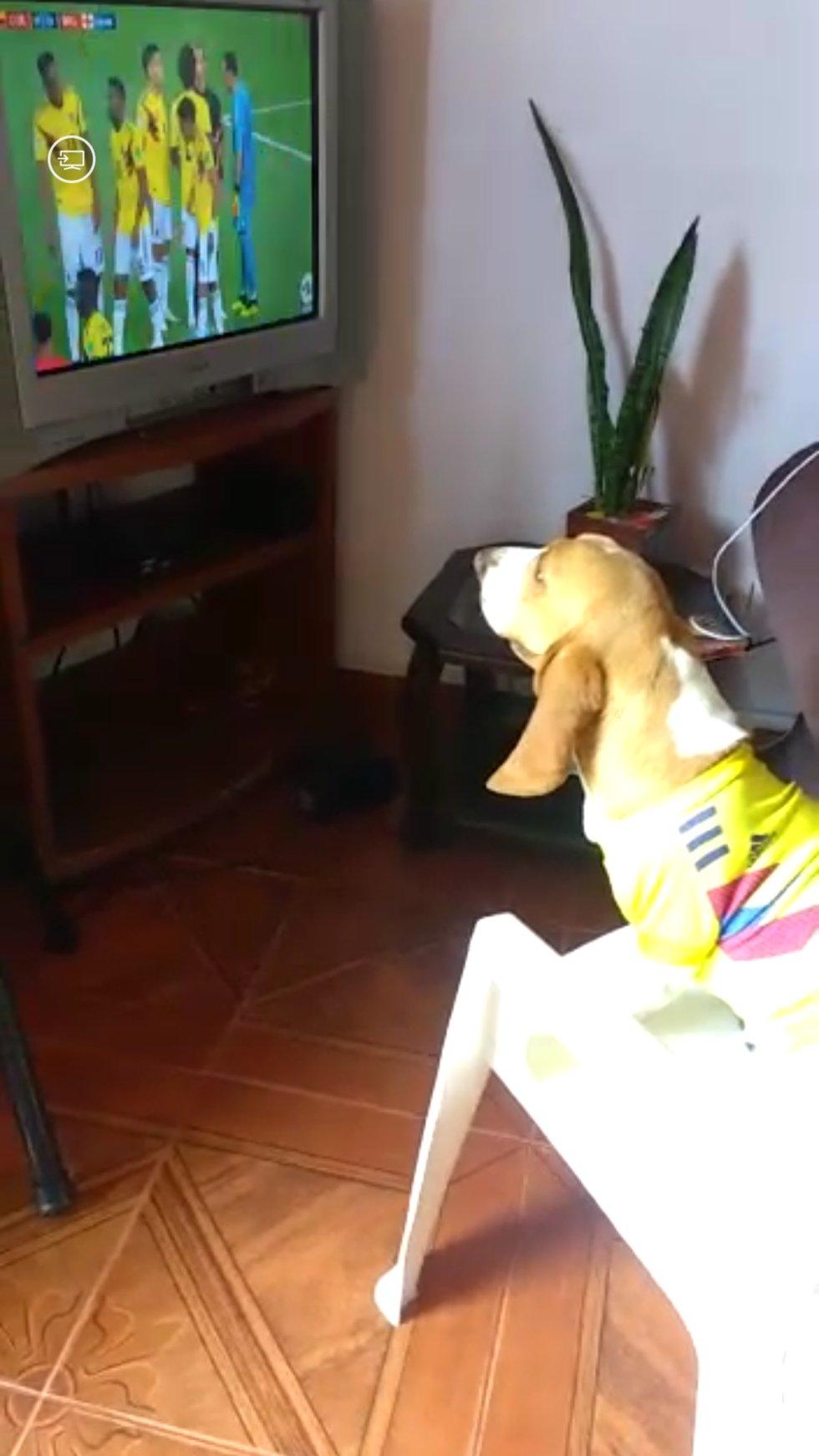 Daniela Gutierrez nos envía la foto de Sasha disfrutando el partido de la Selección Colombia