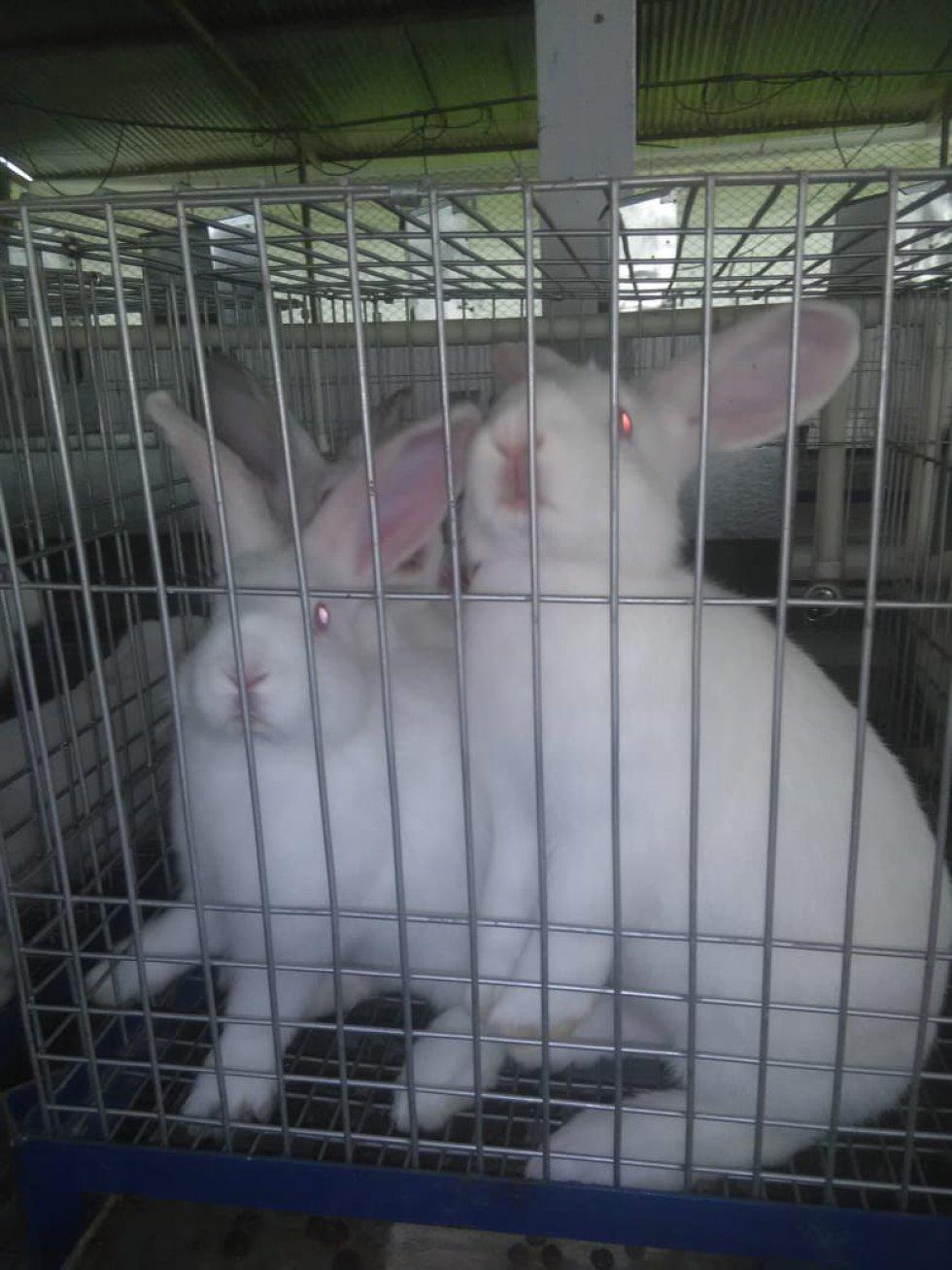 Cría de conejos