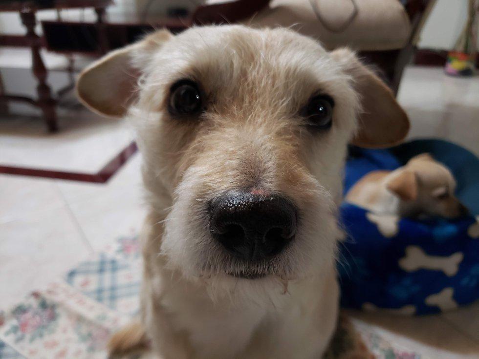 """Carolina González nos envió la mirada de su perrito Coco: """"Su profunda mirada brinda tranquilidad, confianza y amorrrrrr"""""""