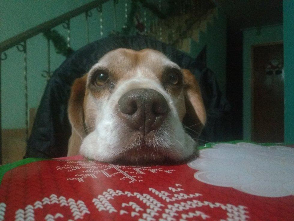 Ros Mery López nos mandó la foto de su perrito de 5 años, Chocolate
