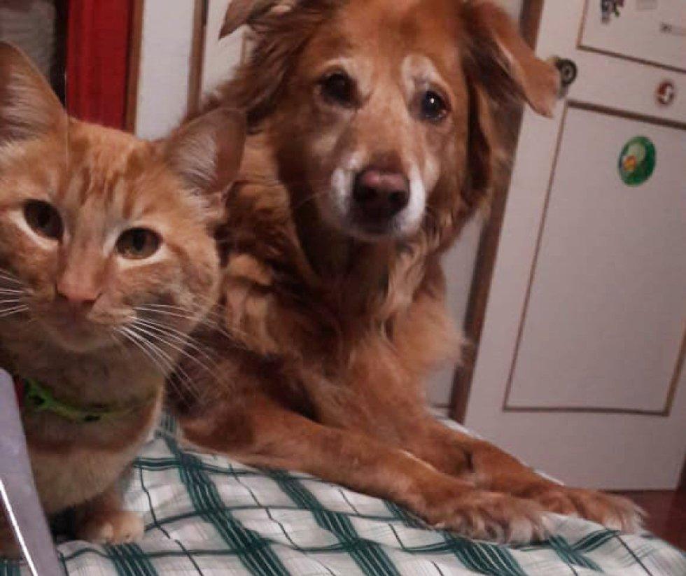 Tito Masmela nos mandó la foto de las dos miradas más tiernas que lo acompañan en su casa, su perro y gata, Gara y Ziggi