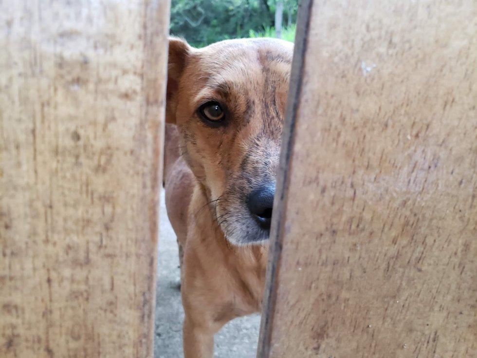 """Camilo Mancera nos envía la foto de su perro Tigre quien lo mira desde el otro lado de la puerta de la casa de campo y la foto iba acompañada de este mensaje """"Me encantaría leer ese libro junto a Tigre""""."""
