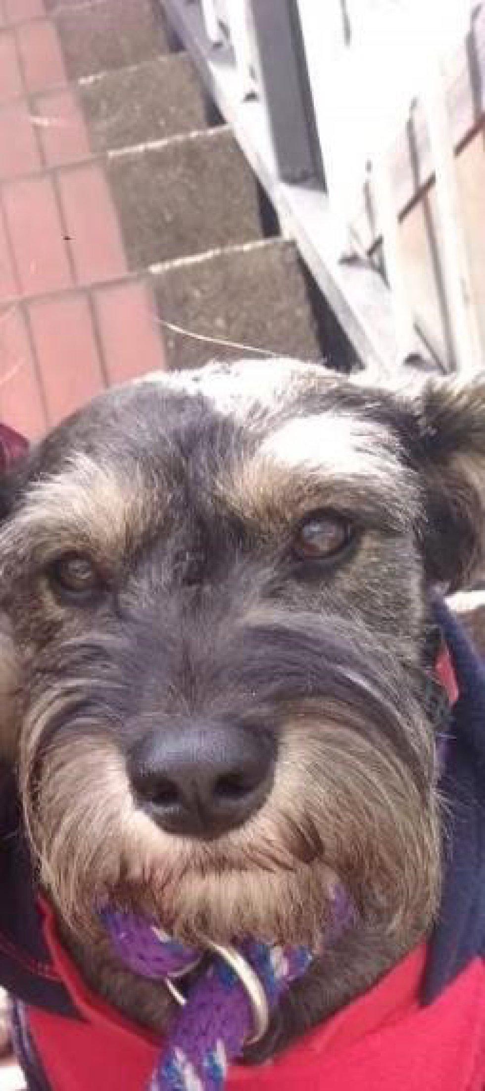 Clara Castañeda nos envió la foto de su hermoso perrito Tobías que la mira con mucho amor