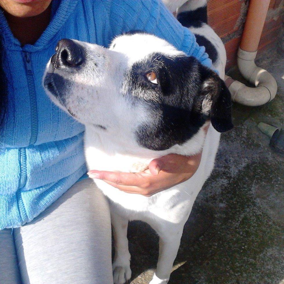 Diana Martínez nos mandó la foto de su perrito Lucas, una mirada llena de mucho amor