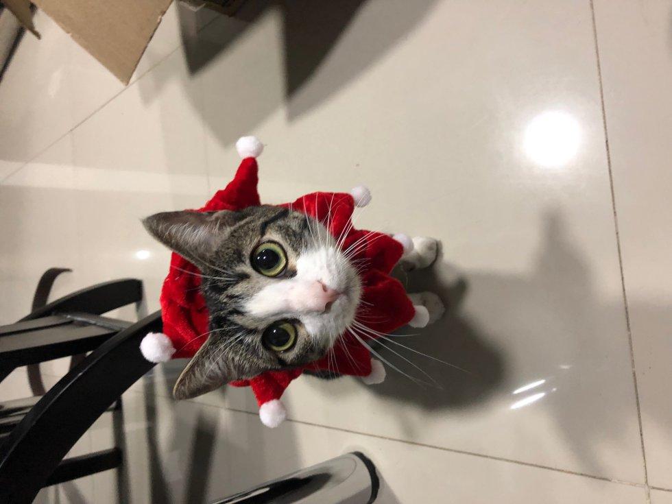 Edwin Díaz nos envía la foto de su gatita rayitas