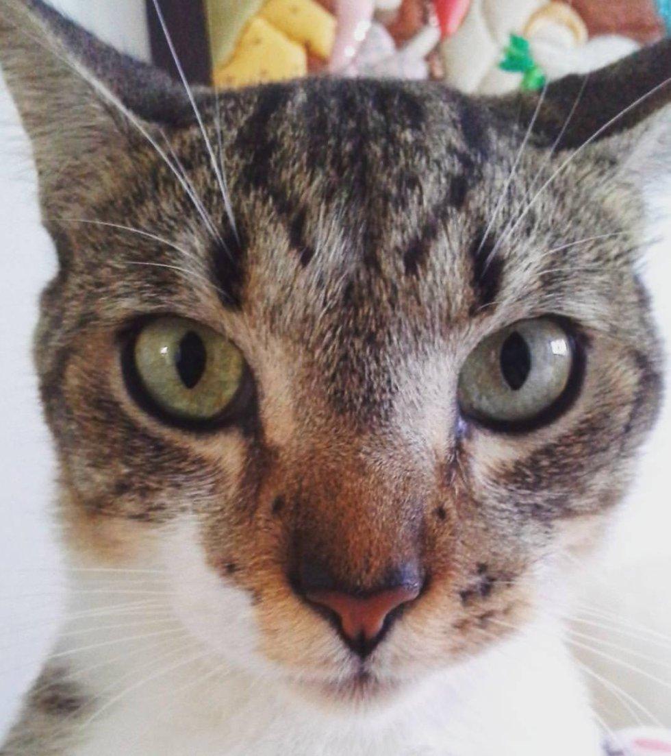 Juan Arismendy nos mandó la foto de su mascota junto con este mensaje: Mi gato Luzo con su hermosa mirada