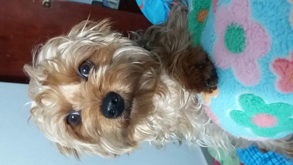 Luz Carrillo nos envía la mirada más tierna que la enamora de su mascota