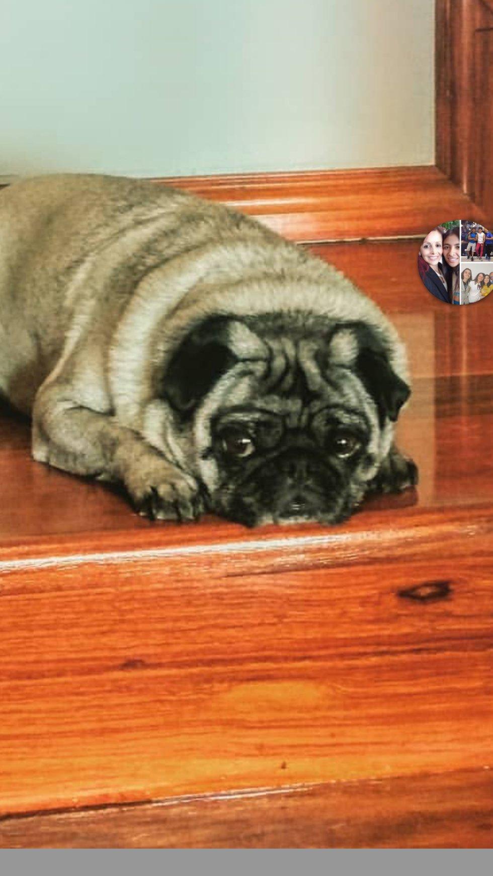 """Silvia Ordoñez nos envía el siguiente mensaje: """"Hola mi mascota es Agatha de 8 años, con su mirada me tiene a sus pies"""""""
