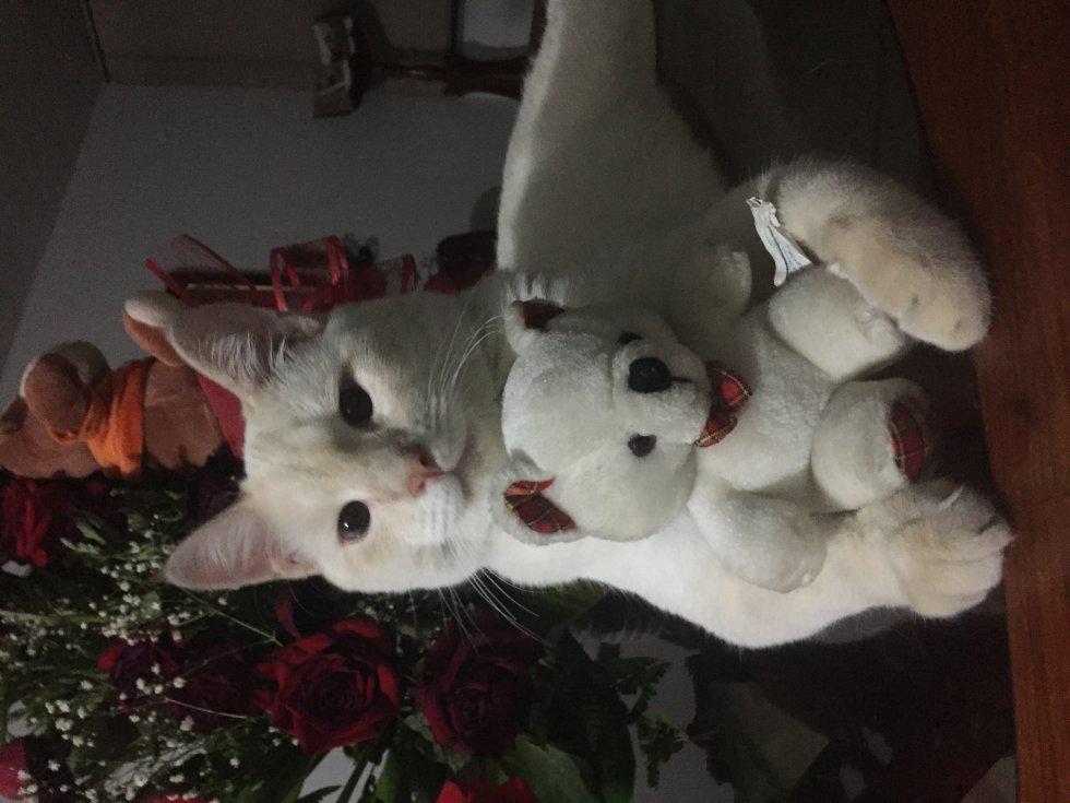 Sonia Osorio nos envió la foto de su gato Tommy, un gatito muy tierno.