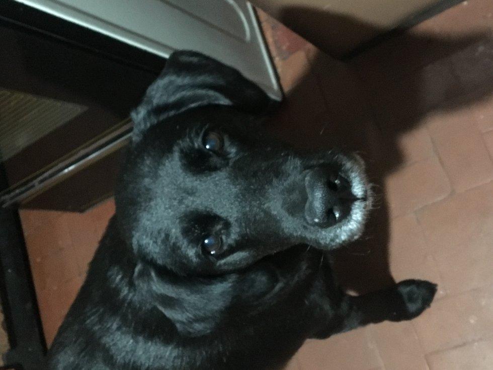 Stella Patiño nos envía la mirada de su perrita Sasha