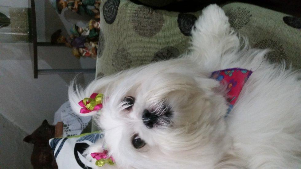Carlos Restrepo nos envía la foto de su perrita Estrellita
