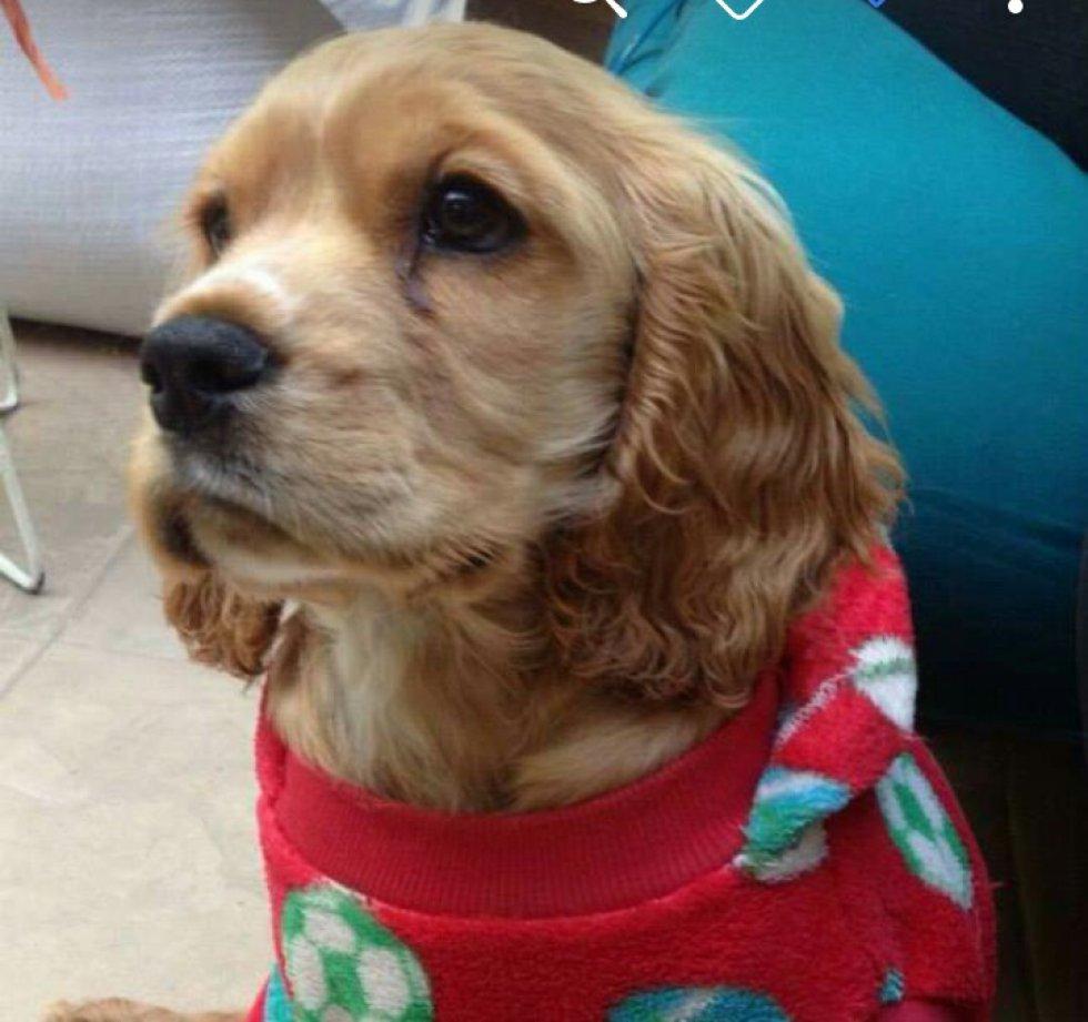Jenny Espinosa nos mandó la mirada de su perro Rocko