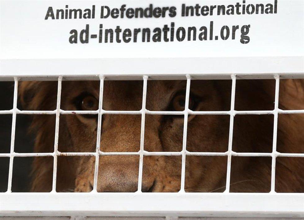 Autoridades ambientales hicieron llamados de atención para generar conciencia sobre el uso indebido de animales en los espectáculos circenses.