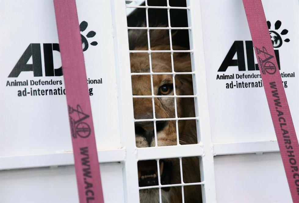 9 de los leones salieron desde el departamento de Santander en Colombia