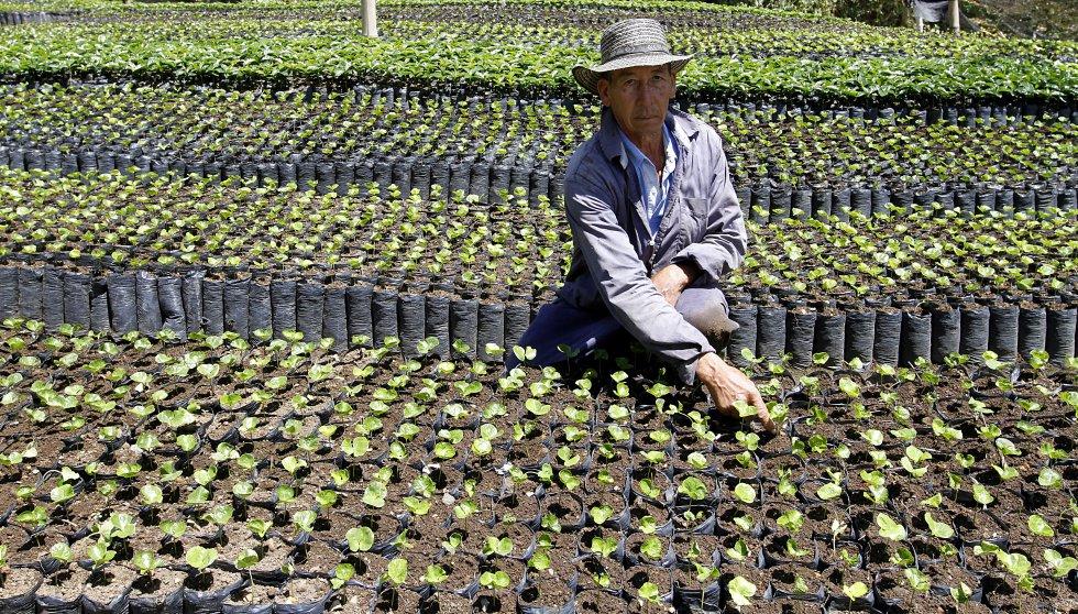 Agricultores de Café